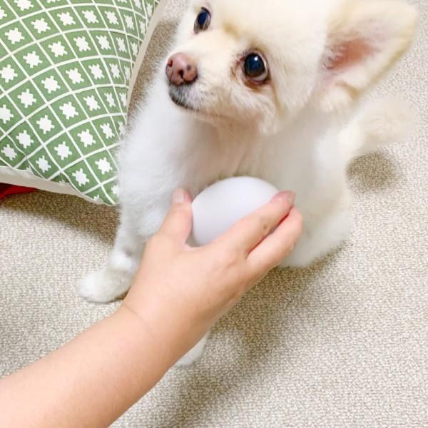 PETKIT マッサージ・コーム