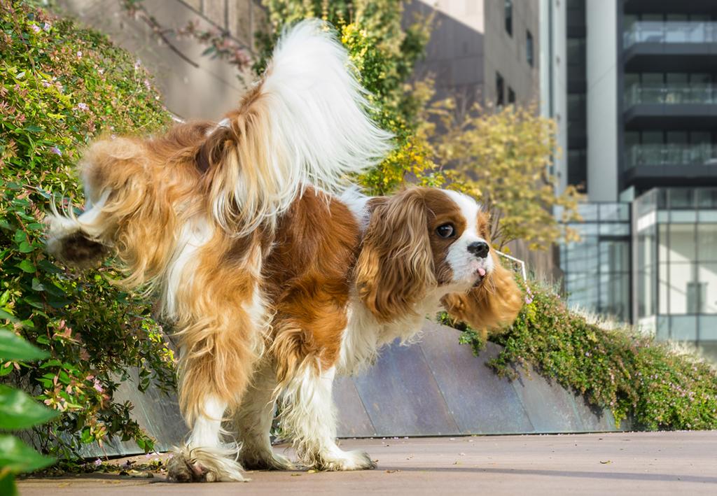 こ 犬 法 オシ 撃退 っ の 散歩犬のオシッコ対策~家の前で堂々と・・・