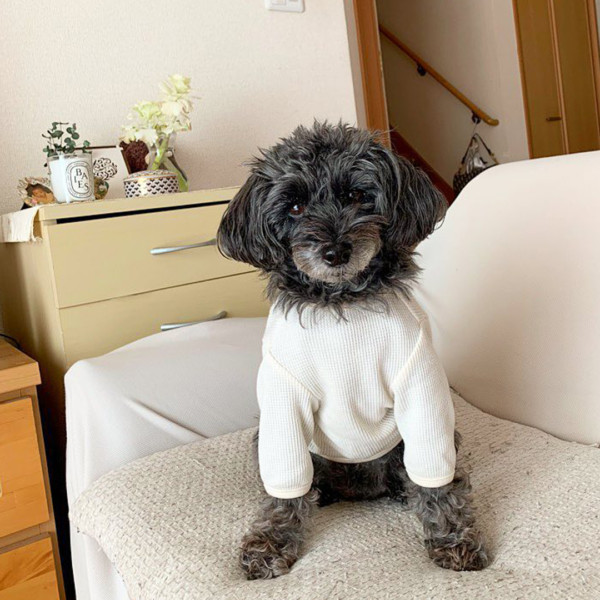 Woolly waffle t-shirt アイボリー