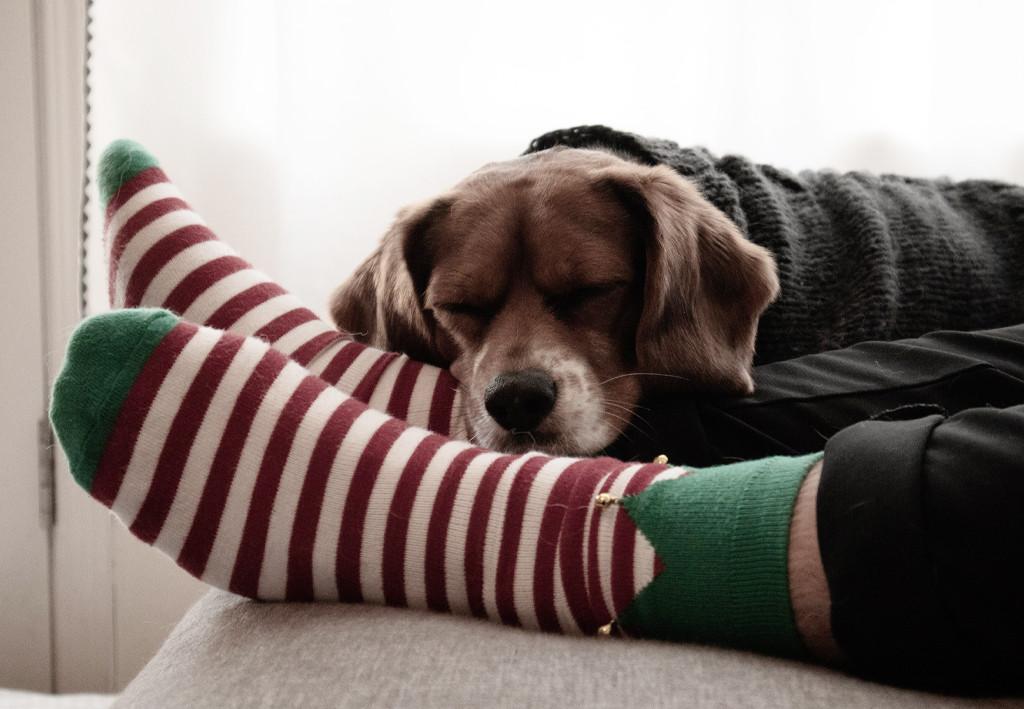 足元 寝る 犬 で