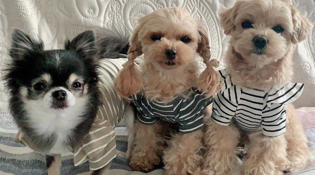 TOTO&ROY ウィーリーストライプTシャツ